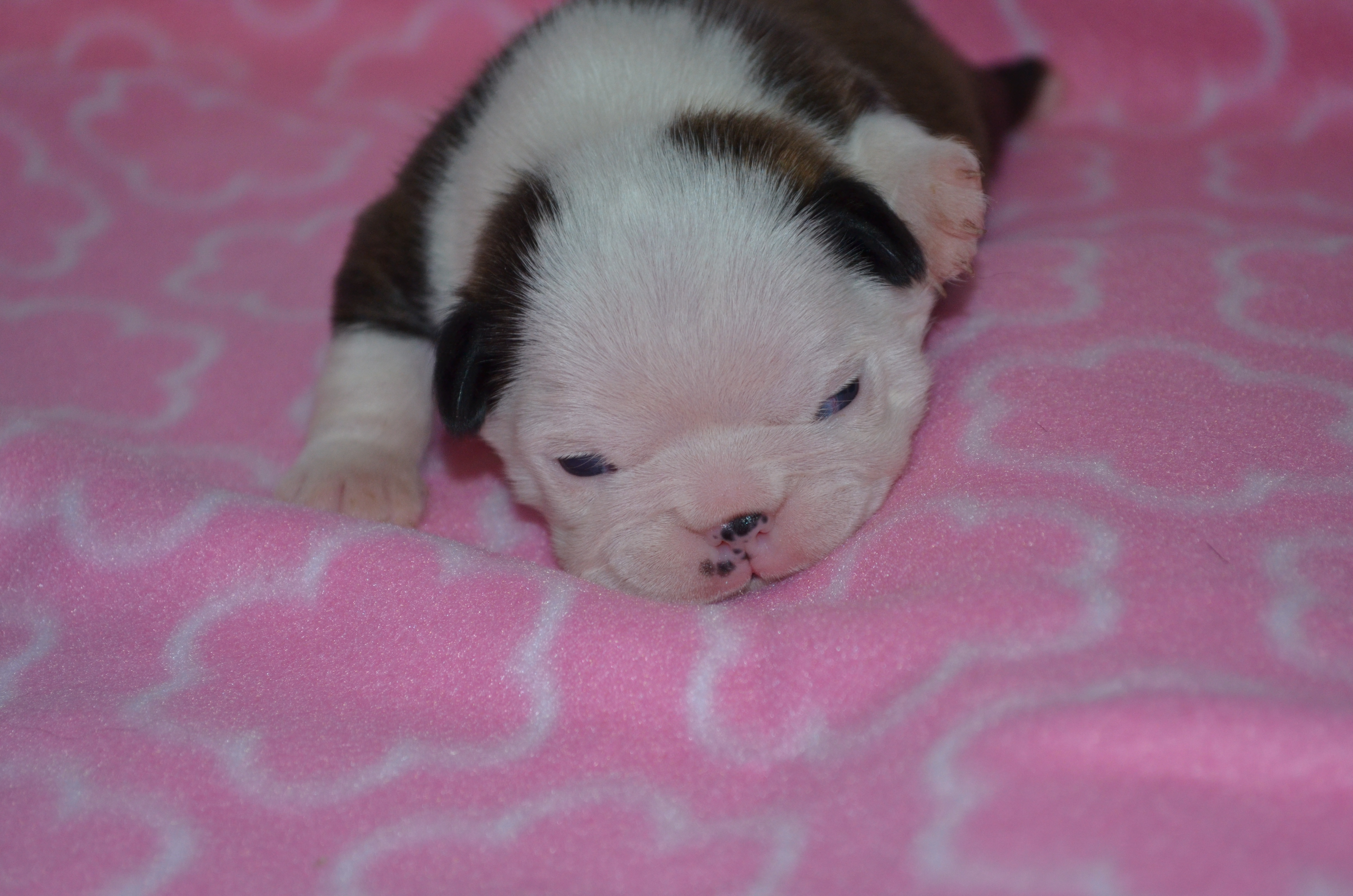 Two Weeks Old and Eyes are Open!
